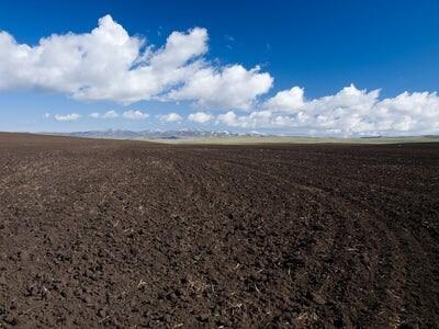 Fósforo: un recurso no renovable pero esencial para la vida