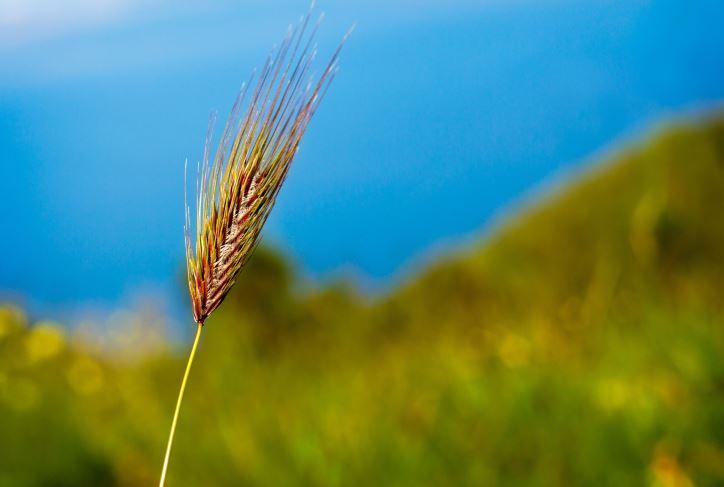 L'importance du phosphore dans le plan agroenvironnemental de fertilisation – la contribution de Solugen