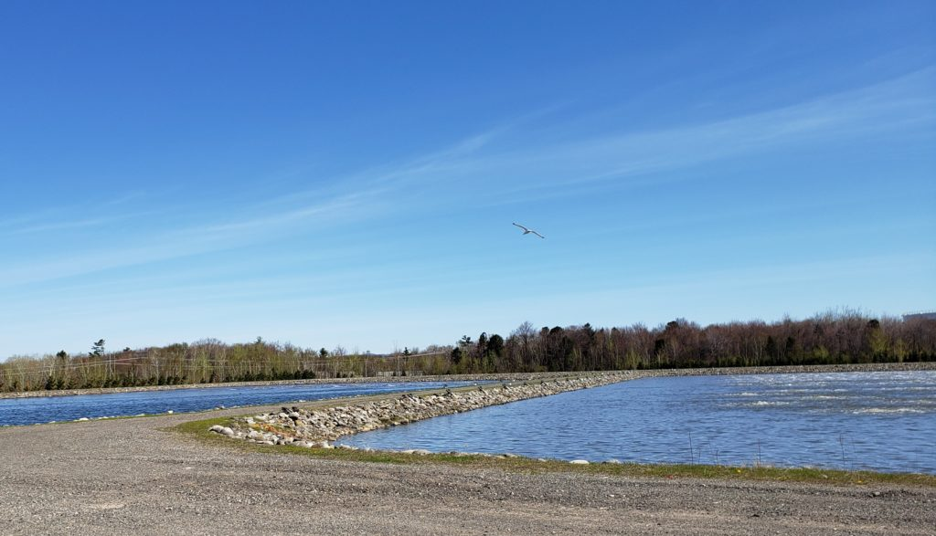 Eaux municipales – Les étangs aérés
