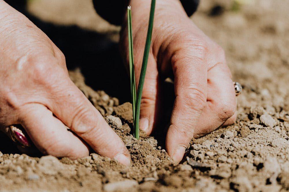 Fertilisation: engrais biologiques et engrais chimiques : deux approches