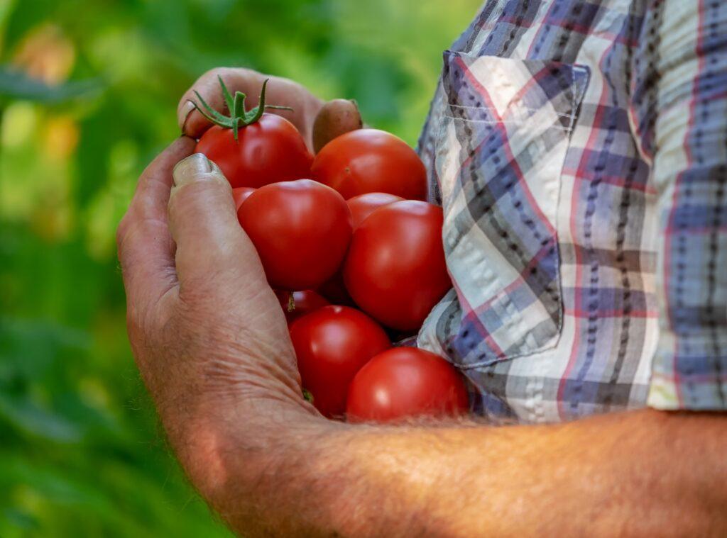 Agriculture biologique: un secteur en plein essor . Solugen, un rôle à jouer