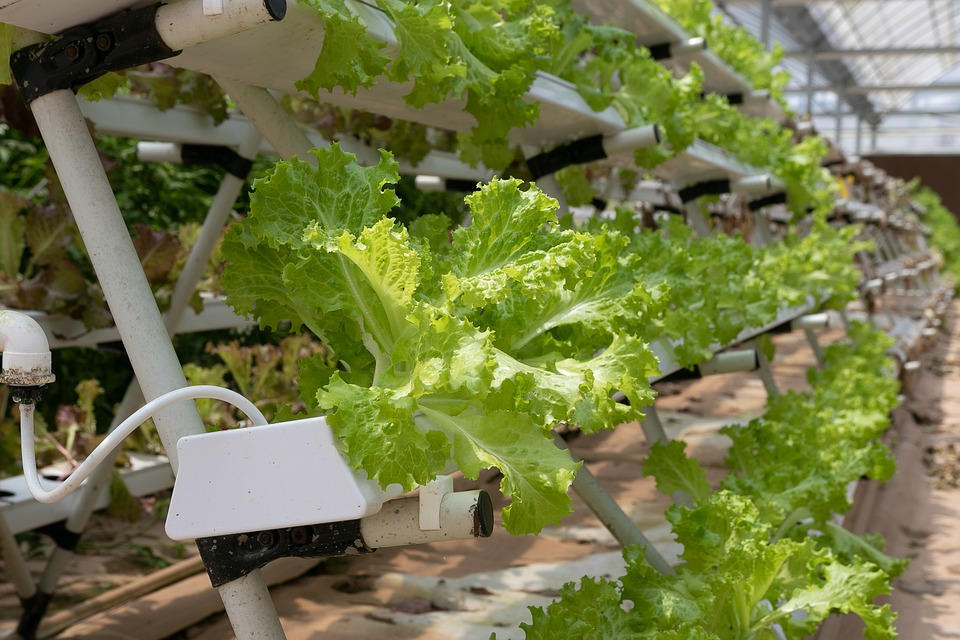 Hydroponics and Solugen – An interesting synergy
